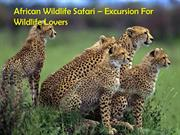 African Wildlife Safari – Excursion For Wildlife Lovers